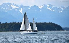 Cruiser NP436 ( Gillfoto) Tags: alaska sailing juneau southeast schooner cruiser