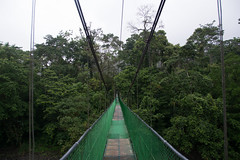 Canopy Bridge in Tirimbina