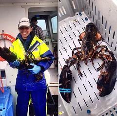 Caitlin Hopkins from Cape Breton, Nova Scotia in Canada getting stuck into the lobster season #stormlinegear #lobster #capebreton #novascotia