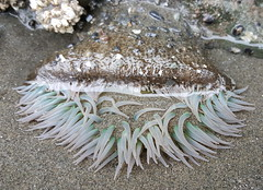 Sea creatures in the tidal pools at Olympic NP
