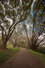 Just Another Walk in the Park (duncan_mclean) Tags: trees lamp grass streetlamp path auckland domain