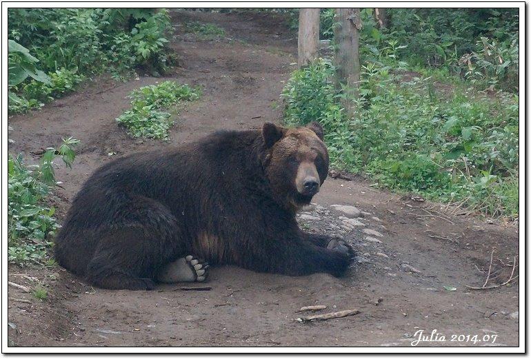 熊牧場 (2)