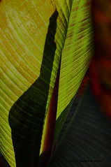 "Leaf Drama • <a style=""font-size:0.8em;"" href=""http://www.flickr.com/photos/26989598@N08/19656559014/"" target=""_blank"">View on Flickr</a>"
