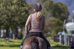 IMG_2424 (gavinglis) Tags: horses horse equestrian equine tamworth horseandrider kiah aussieequestrian kiahequestrian