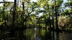 Anglų lietuvių žodynas. Žodis swamp reiškia 1. n bala, pelkė; klampynė; 2. v 1) užlieti, užtvindyti; nugramzdinti; 2) apiberti; užversti, nustelbti (gausumu) lietuviškai.