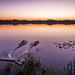 Lake Cane at sunrise - Orlando, Florida - Landscape photography