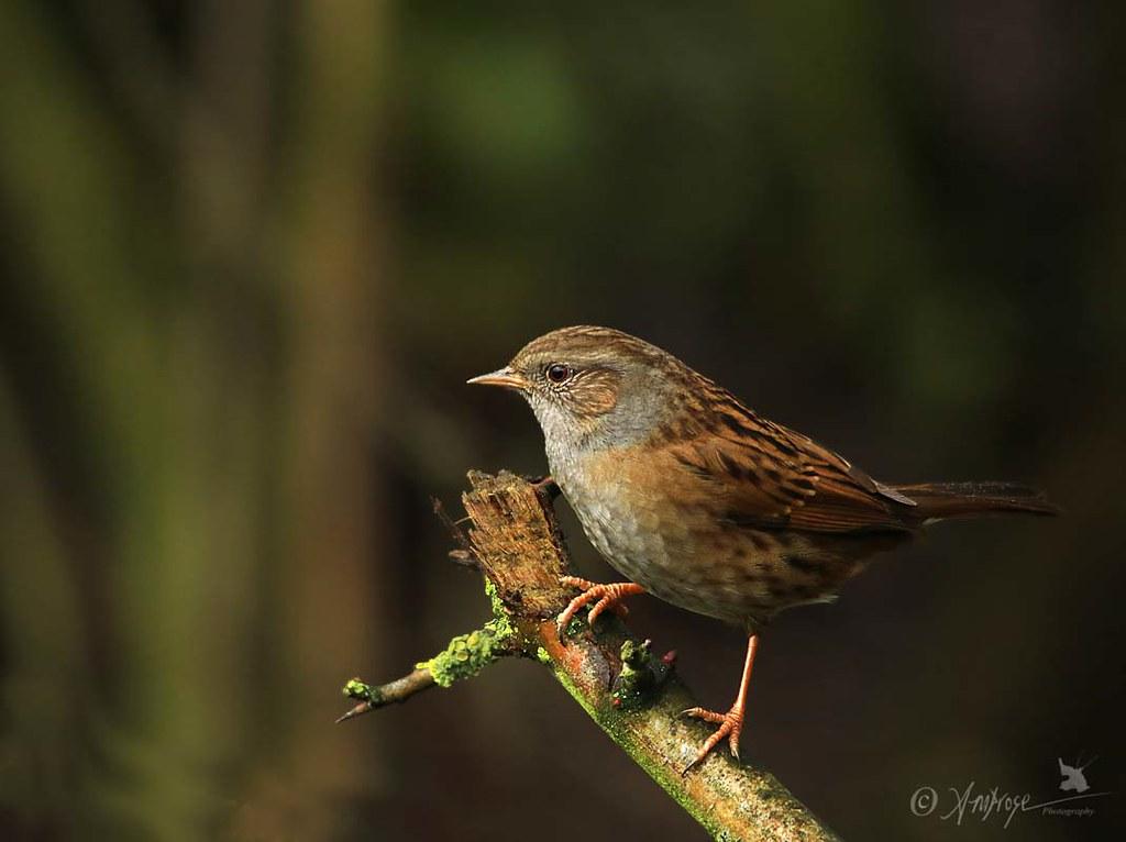 The Wildbirds - Sunshine Blues