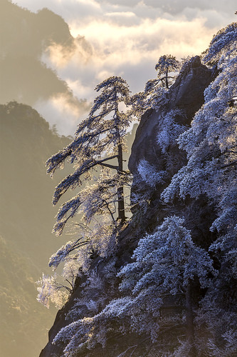 Huangshan frost