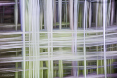 Birch Trees, October (BlueHaiku) Tags: icm rambouillet forest lines multipleexposure trails