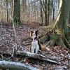Mein persönlicher Märchenwald <3 #bordercollie #bordercolliesofinstagram #border #hütehund #hütehunde #herdingdog #herdingdogs #doglover #doglove #redbordercollie #dogsofinstagram #dogsofig #nase #hund #hunderunde #dailyinsta #walkthedog #dogs_of_instagra (wandklex Ingrid Heuser freischaffende Künstlerin) Tags: ifttt instagram malaika bordercollie border hund dog wandklex privat private familie family meetthemaker huetehund herdingdog dogslife