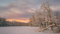December light over Storjord in Kvafjord (Reidar Trekkvold) Tags: xt2 xf1024ois cold fujifilm ice kvæfjord landscape mountain natur nature nordnorge norway outdoor skog snow snø storjord troms vinter winter brilliant