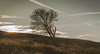 Fading Light. (Ian Emerson) Tags: tree minimal sun hills lonely single autumnal grassland peakdistrict staffordshire canon outdoor landscape clouds sunset