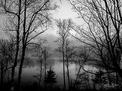 Mist On The Lake (mikederrico69) Tags: bw blackandwhite lake landscape water trip travel peace peaceful forest zen mist branches dusk north sunrise gloomy erie platinumheartaward