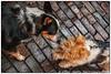 20050605-20050605-File18565-Edit.jpg (Eddie Smith) Tags: tasha pentaxistds makingfriends woofstock2005