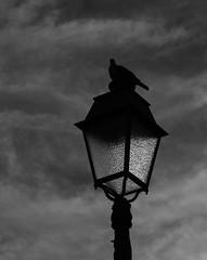 Silhouette perchée (zuhmha) Tags: totalphoto