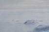 Swans of Tuonela (elfsprite) Tags: helsinki lauttasaari drumsö merisavu seasmoke arctic arktinen pakkanen coldweather tuonela tuonelanjoutsen swan kyhmyjoutsen cygnus cygnusolor