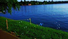Serenity (luthomas) Tags: bubble soap balloons lake water blue green colors day beautiful light playing playiful happiness beauty sapone paloncini lago azzuro verde colore intenso gioco bolle bubujas jabon juego allegria felicidad hermosura