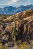 Saguaro National Park (fred h) Tags: sagauro122920166803 saguaronationalpark fredholley