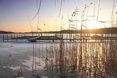 IMG_3232 (wozischra) Tags: berlin heiligensee spaziergang baumberge höchster baum altheiligensee