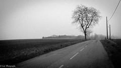 20161231Brouillard-8 (loflol) Tags: coteaux brouillard brume ancien grain