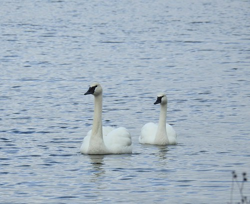 Lagoon Duo