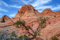 Y by Jim (alpenglowtravelers) Tags: yant flat utah sandstone