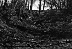 (|Digital|Denial|) Tags: cemetery swamp blackandwhite noir rangefinder minolta himatic7s contrast dark moody gloomy trees sky silhouette