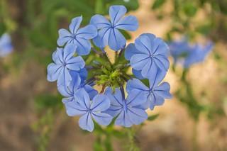 Belo e suave azul / Beautiful and soft blue