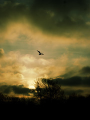 flying (Darek Drapala) Tags: birds bird flying fly sky skyskape skaryszewski clouds sun sunset silhouette nature lumix light panasonic poland polska panasonicg5
