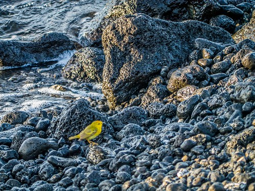 """Galapagos-62.jpg • <a style=""""font-size:0.8em;"""" href=""""http://www.flickr.com/photos/91306238@N04/32321609192/"""" target=""""_blank"""">View on Flickr</a>"""
