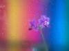 Orchidee (PhotoChampions) Tags: orchidee farbe bunt regenbogen wassertropfen blüte pflanze tabletop