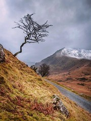 The Tree (Einir Wyn) Tags: lonetree tree snowdon wales snow peak winter track colour landscape wilderness outdoor sky moody weather climate orange light beauty nature natural natur uk britain british welsh cymru cymraeg nikon rural isolated