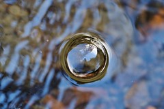 the bubble in the burn...... (Suzie Noble) Tags: bubbles bubble reflections reflection strathglass struy burn water