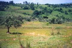 Vista  da Erosao em Recuperacao (joaobambu) Tags: 1998 farm fazenda aerial landscape brazil brasil echapor echapora