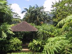 Martinique - Jardins de Balata