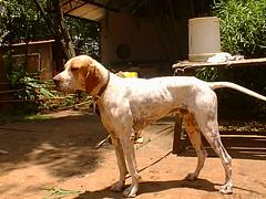 PIC00030 (joaobambu) Tags: 1998 echaporã echapora brazil brasil family familia chacara
