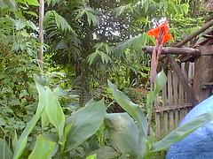 PIC00031 (joaobambu) Tags: 1999 february fazenda farm familia brasil brazil echapor echapora