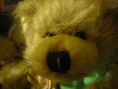 Macro Teddy Bear