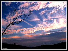 Sunset Sky (Gabriel Cavedon) Tags: sunset brazil sky 15fav tree 2004 nature brasil clouds natureza cu nuvens rvore cavedon