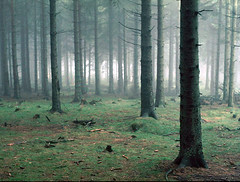 german forest (lightpainter) Tags: forest germany mostfavorited rated6 topf400