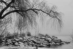 Jack Darling Park (C. Wendorf) Tags: jackdarlingpark lake lakeontario winter canon7d canon 7d 55250mm