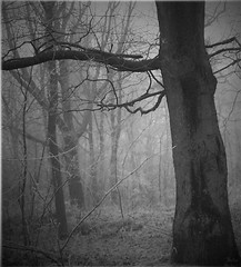 Who is afraid of the wolf? (sole) Tags: winter bw nature forest dark obscure