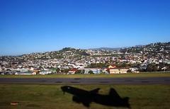 takeoff (Brenda Anderson) Tags: shadow newzealand airplane geotagged airport flight aeroplane nz wellington takeoff runway fromthewindowseat curiouskiwi intheshadowutata utataview geo:lat=41320832 geo:lon=174807436 brendaanderson curiouskiwi:posted=2005