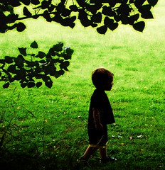 Boy with Trees (mod) (Brenda Anderson) Tags: trees boy grass silhouette greenisbeautiful pcss flickrout050116 curiouskiwi cafethread ssgreen intop40set sssilhouettes tc35green brendaanderson curiouskiwi:posted=2005
