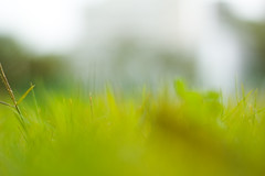 Castle of Justice (miskan) Tags: kuwait green grass blur abstract lime low ground trippy nikon d70