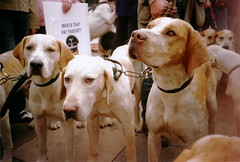 pro-hunt1-19 (lomokev) Tags: dog dogs brighton cosina protest hunt prohunt laborpartyconference cosinacx2 cx2 deletetag