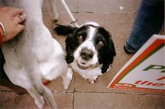 pro-hunt1-22 (lomokev) Tags: dog dogs brighton cosina protest hunt prohunt laborpartyconference cosinacx2 cx2 deletetag