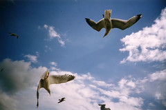 seagulls (lomokev) Tags: blue sky cloud seagulls bird brighton cosina agfa ultra cosinacx2 cx2 agfaulta file:name=ltobride30a