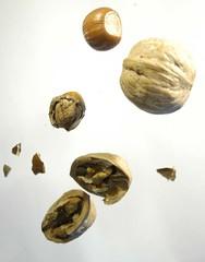 Going nuts 2 (mrjorgen) Tags: nut nuts hazelnut walnut stilleben stilllife weightless airborne cracked flying nøtter nøtt