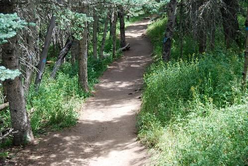 path in NM